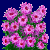 flowers:45.mature.99.png